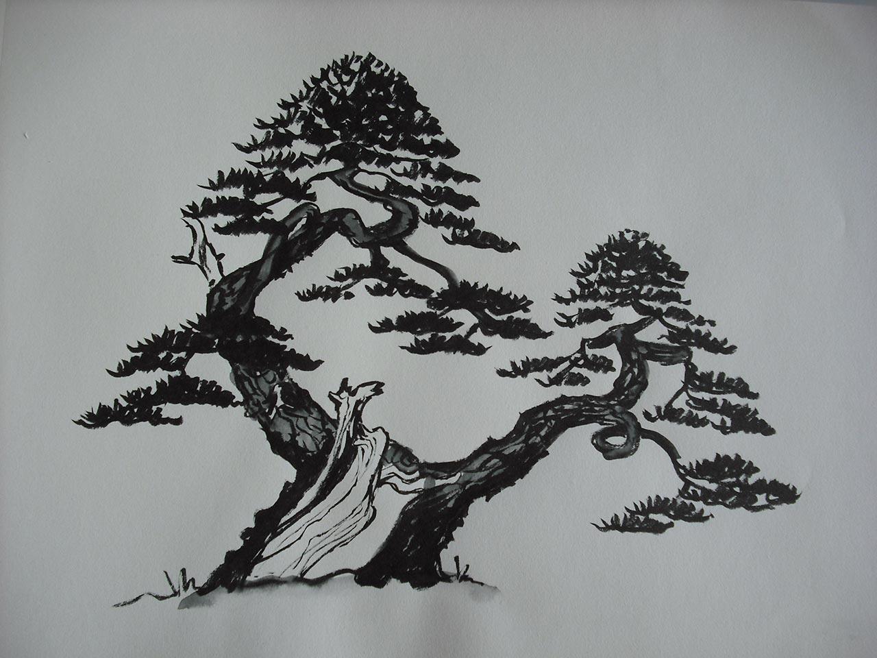 diseño definitivo de pino silvestris