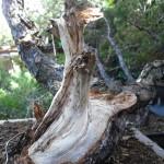 trabajo realizado en la madera de pino silvestris