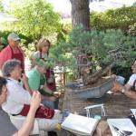 la complejidad del pino silvestris reclama su atención