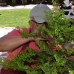detras del frondoso bonsái