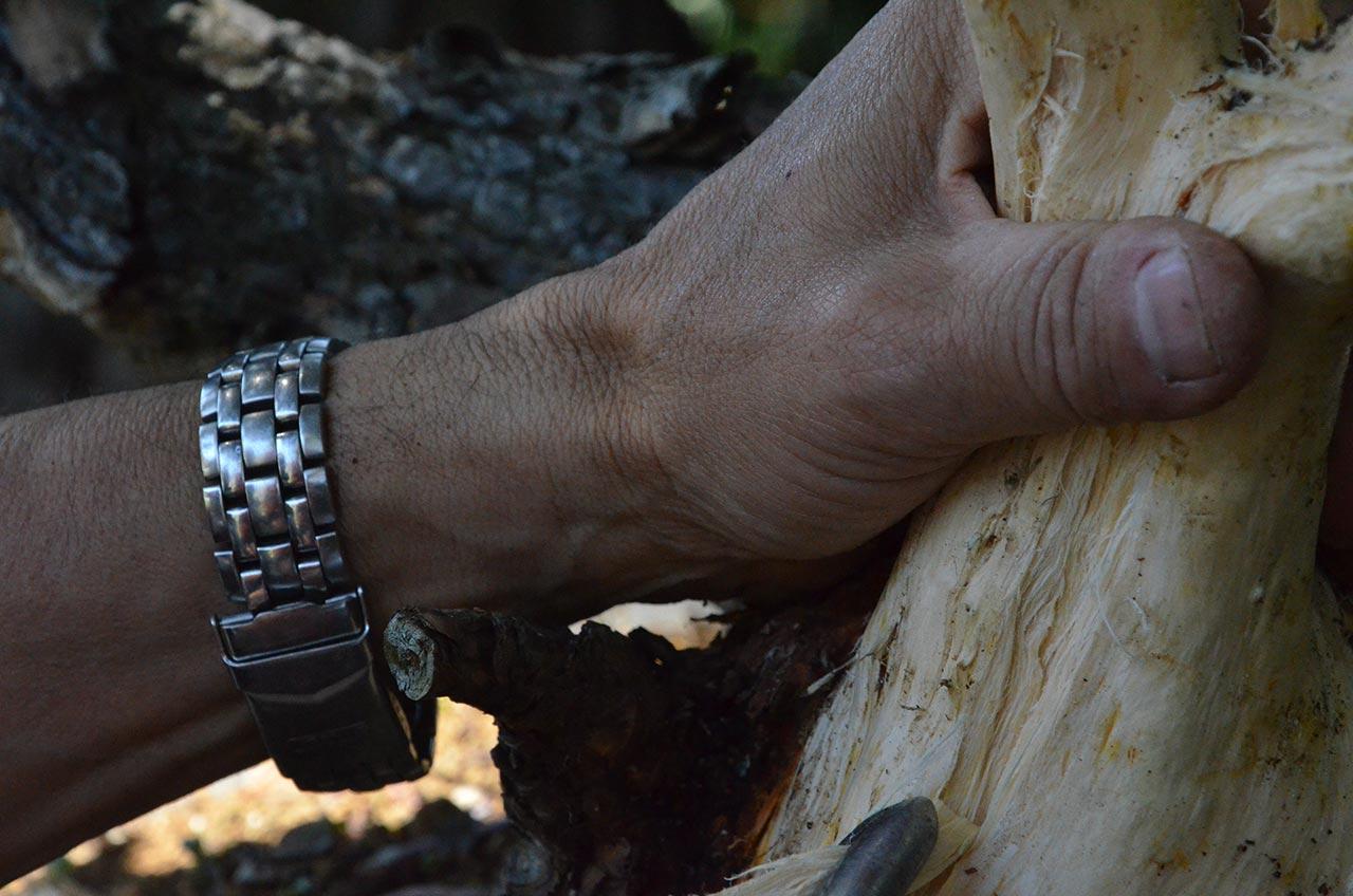 más detalles de madera muerta