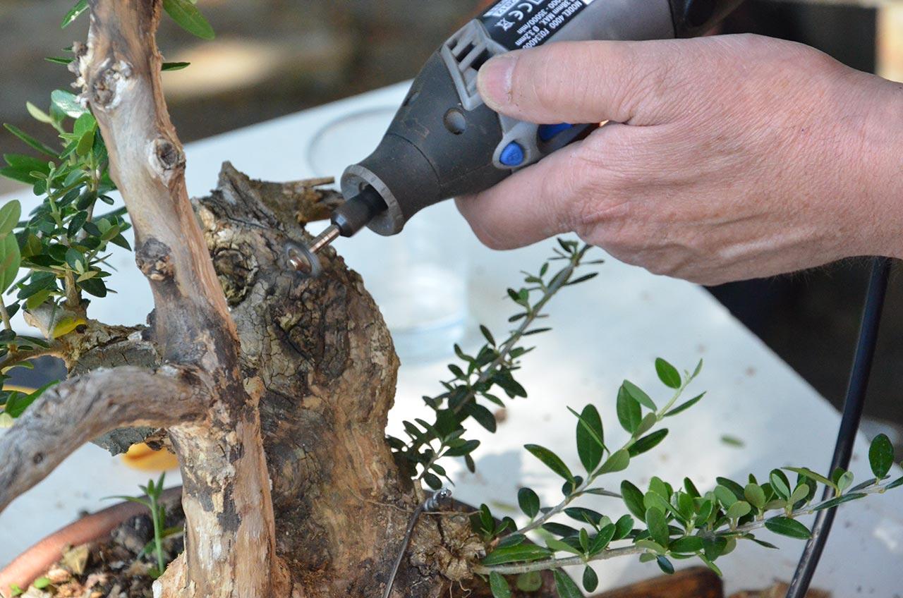 útiles mecánicos para limpieza de las duras maderas muertas