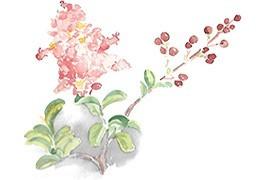 Bonsáis de Flor y Fruto