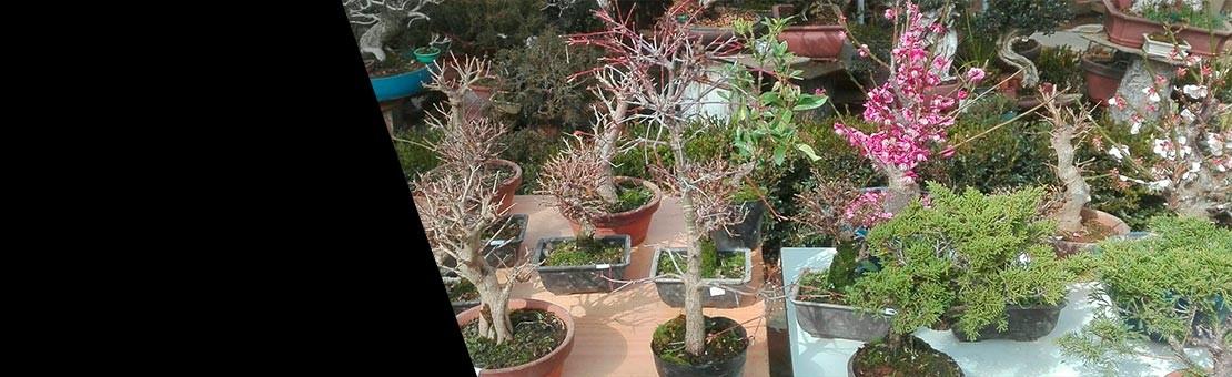 nuevos bonsáis